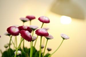 Das Bild zeigt Blumen